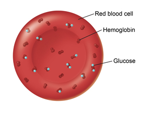 Healthy red blood cell.